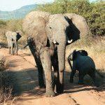 viaje a sudafrica portada