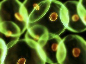 CLARINS_Arthritis Pathologie fréquente