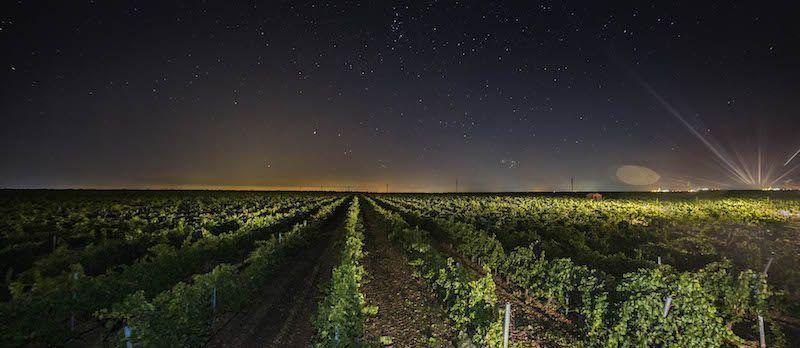 Vendimia nocturna en las Bodegas Aura