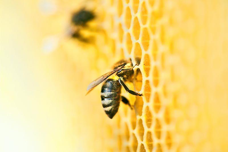 Celebra el día de la abeja apadrinando una colmena
