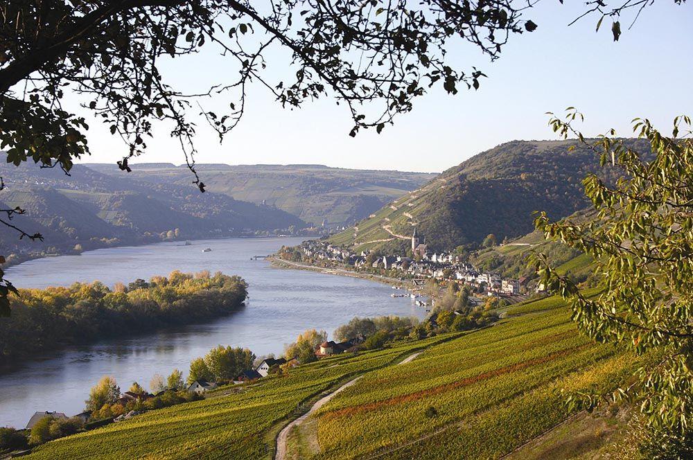 Los vinos del Rhin, el oro alemán
